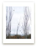 Nine Birds by Celia Maria