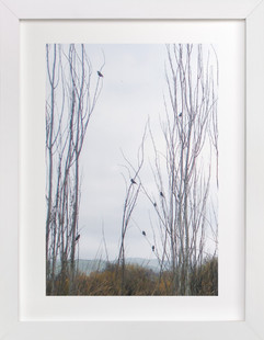 Nine Birds  Art Print
