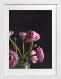 Graceful Pink Peonies  Art Print