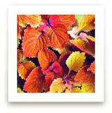 Fall's Blush by Sarah Johnson