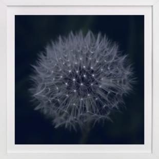 Dandelion Stars  Art Print