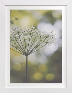 wild flower one  Art Print