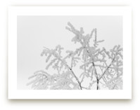 Frost 1 by Ardell McLennan