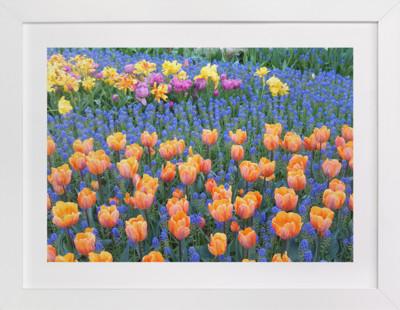 Pretty Garden 3  Art Print