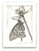 Papillon et Papaver by Stephanie Toral