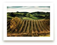 Paso Robles Vineyard Wall Art Prints