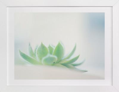 Sunny Succulent  Art Print