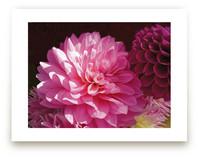 Pink Dahlia by A MAZ Design
