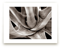 Garden In Santaluz 01 by GLEAUX Art Photo Design