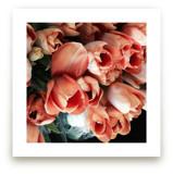Tulips Tulips Tulips by Jan Kessel