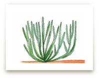 Organ Pipe Cactus 1 by TweetSweet
