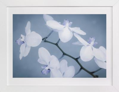 Orchids In Flight Art Print