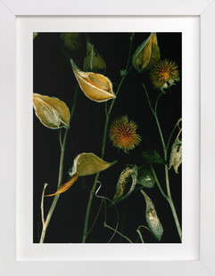Late Spring  Art Print