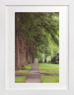The Street I Live On II  Art Print