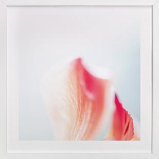 Blended Vibrance  Art Print