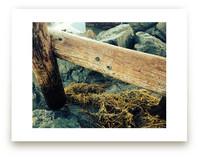 La Jolla Pier Pilings by aeryn donnelly design