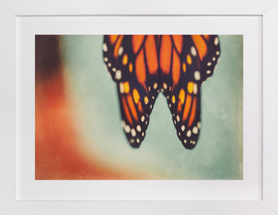 Monarch Study #6  Art Print