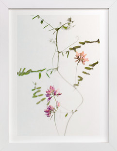 Mauve Tiny Flowers  Art Print