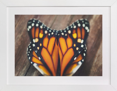 Monarch Study #3  Art Print