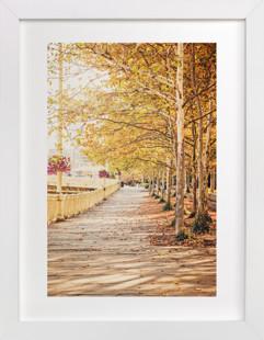 Fall Tree-lined Street  Art Print