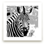 mr ZEBRA by Gail Schechter