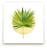 spotlight - fan palm by Kiana Mosley
