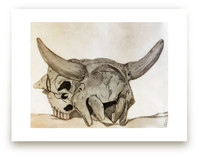 cow skull  by Mely D Lozano