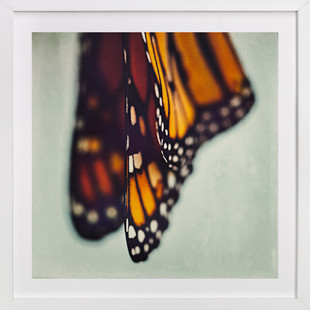 Monarch Study #5  Art Print