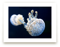 Blue and White Jellyfis... by Gray Star Design