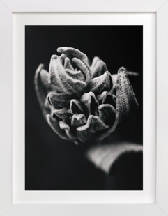 Wild Sage in Black and White II  Art Print