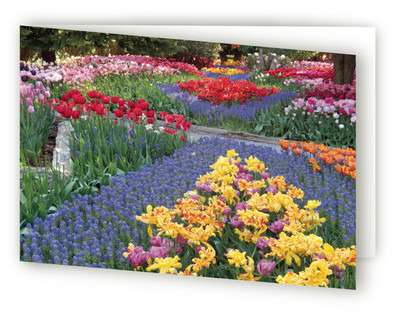 Tulip Garden Self-Launch Greeting Cards