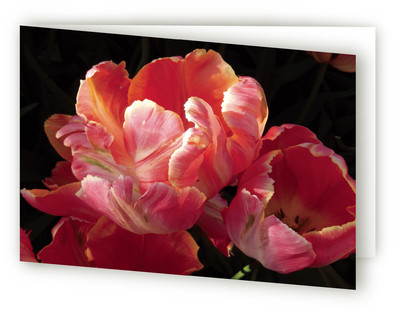 Rose Tulip Self-Launch Greeting Cards