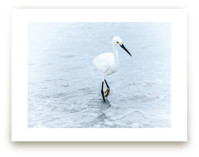 Strutting Bird on the B... by Mary Ann Glynn-Tusa