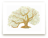 Tree of Life, Audubon Park, New Orleans