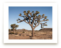 Large Joshua Tree by Kathy Van Torne