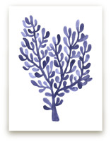 Sea Botanicals IV