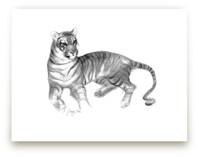 Resting Tigress by Tracy Ann