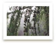 Falling Pines