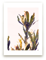 banksia II by Angela Thompson