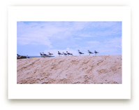 Seagulls on Sand Hill by AreekaDesigns