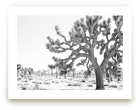Joshua Tree Times by Bree Madden