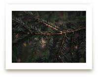 Pine Pete by Katie Short