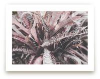 Stripe Pink Portia by Katie Short