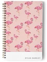 Flamingos Galore
