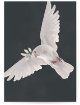 Dove Wings by Zhay Smith