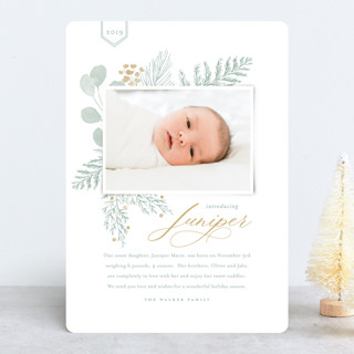 Juniper Holiday Birth Announcements