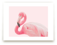 Flamingo Portrait III by Rega