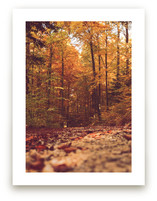Fall in the Woods 2