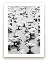 Migratory Birds Part 3