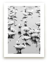 Migratory Birds Part 2